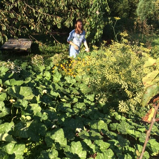 Créer l'abondance grâce au design permaculturel. Courges, cerises, fenouil, tagètes et camomille sur quelques mètres carrés.