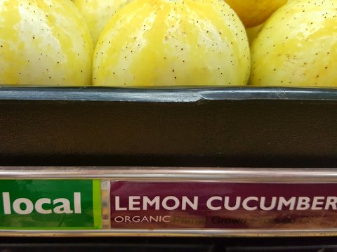 aug 18 lemon cucumbers.jpg