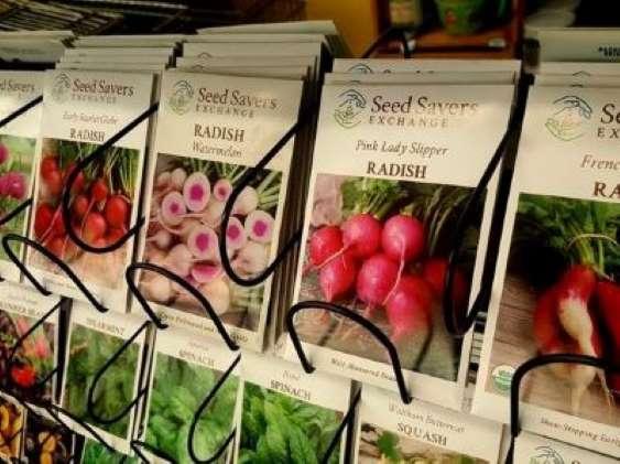 May+19+radish+seeds+Seed+Savers+gardening.jpg