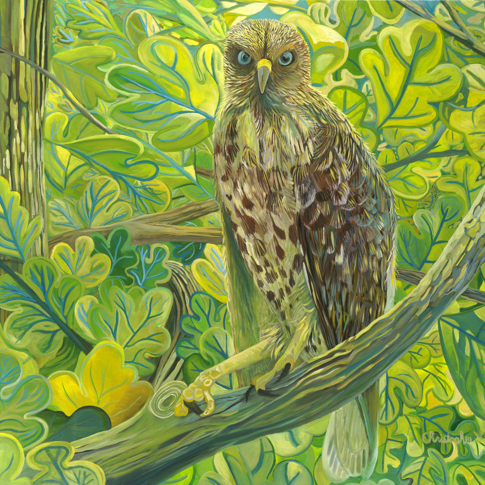 "The Hawk, Oil on Canvas, 30"" x 40"""