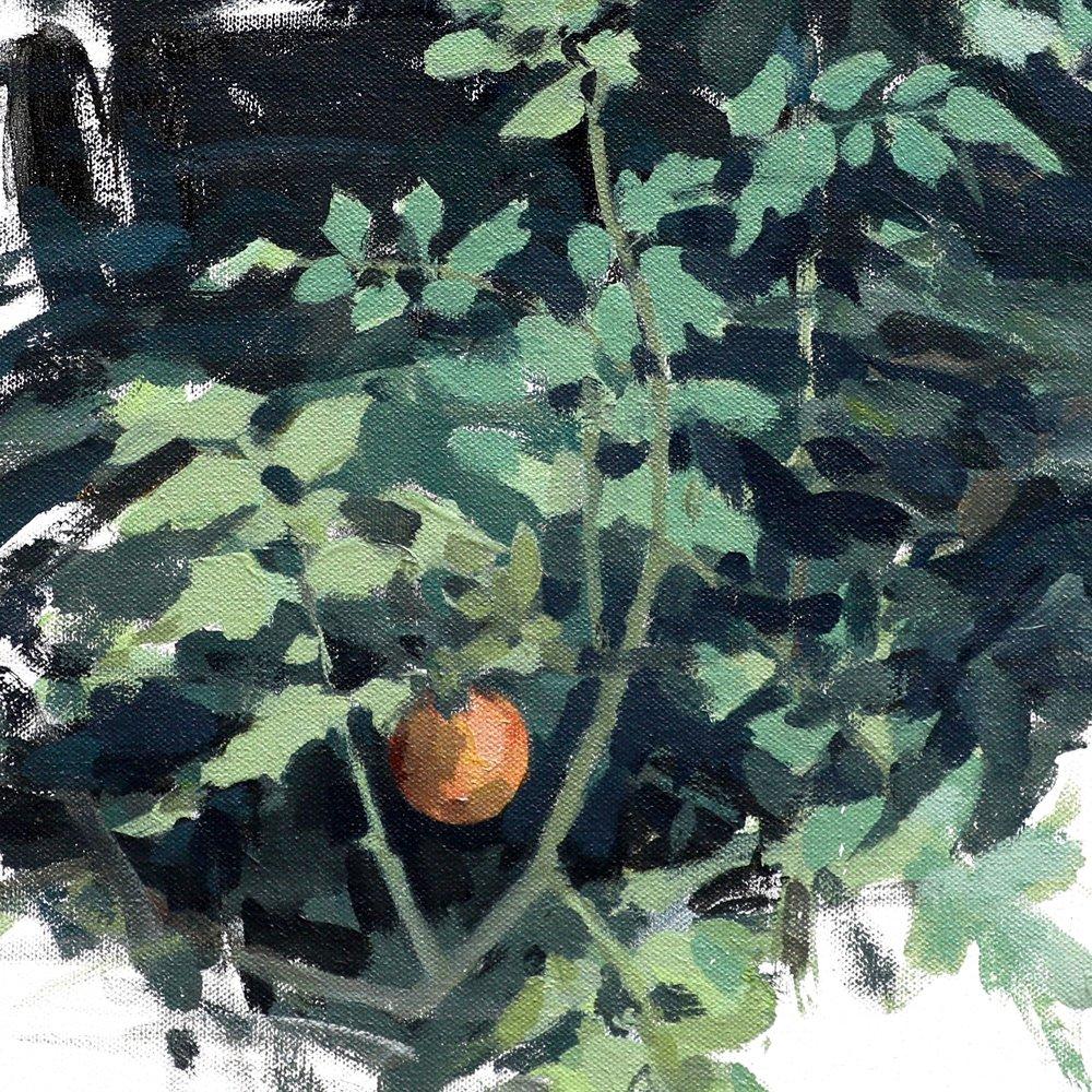"Last Tomato, Acrylic on Canvas, 20"" x 20"""