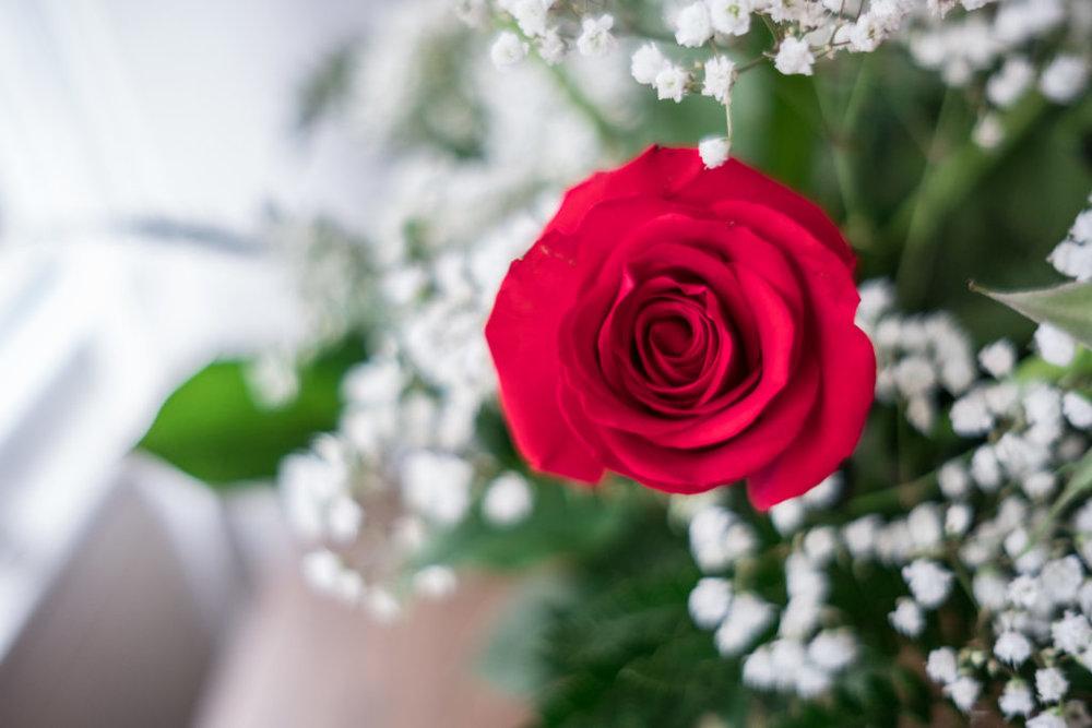 Roses_DSCF1509_20170216_5-1024x683.jpg