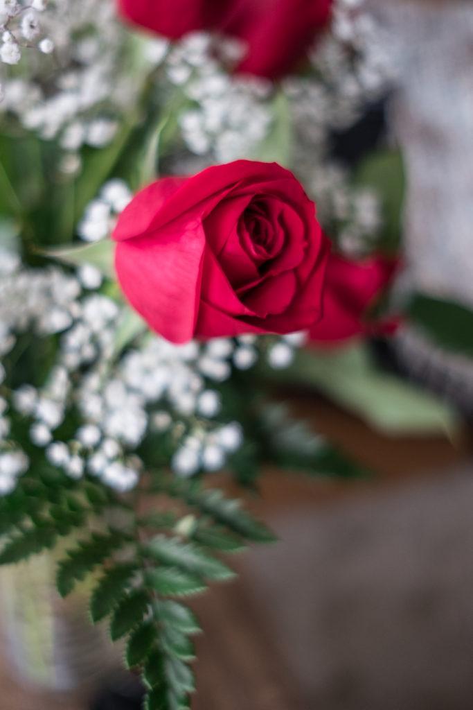 Roses_DSCF1511_20170216_7-683x1024.jpg