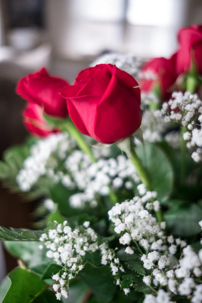Roses_DSCF1515_20170216_11-683x1024.jpg
