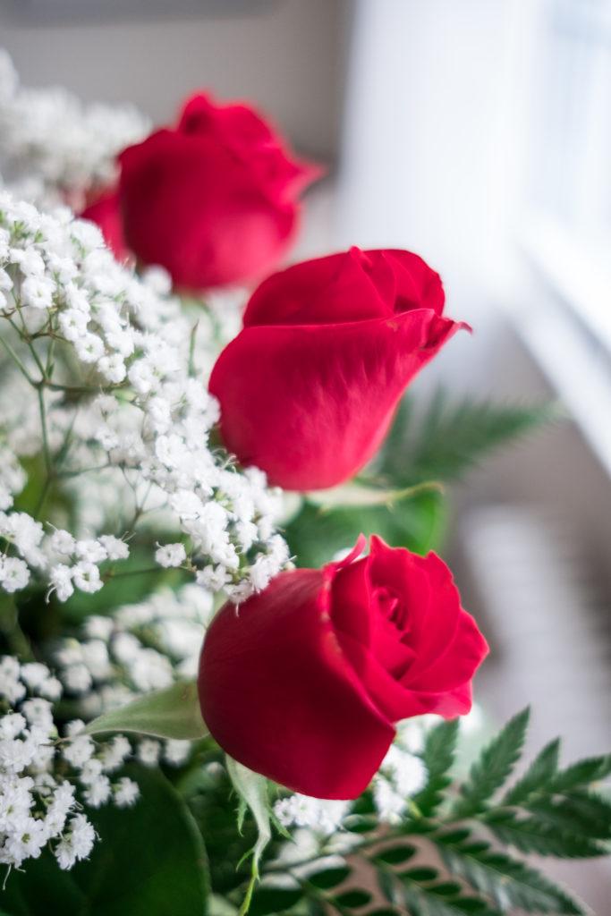 Roses_DSCF1519_20170216_13-683x1024.jpg