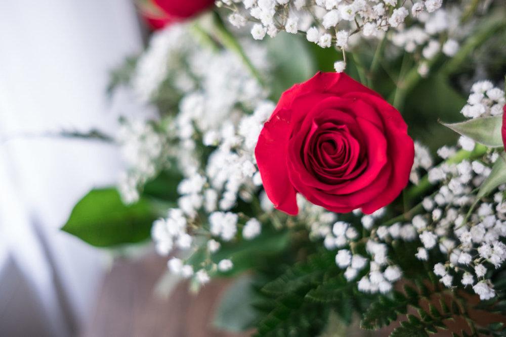 Roses_DSCF1520_20170216_14-1024x683.jpg