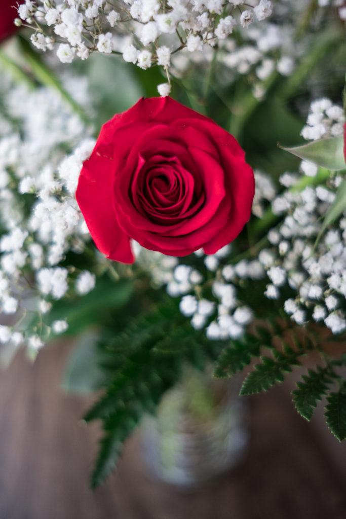 Roses_DSCF1521_20170216_15-683x1024.jpg