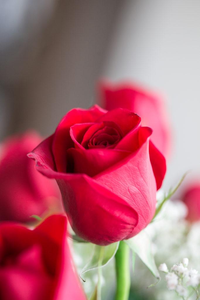 Roses_VGF25042_20170216_17-683x1024.jpg