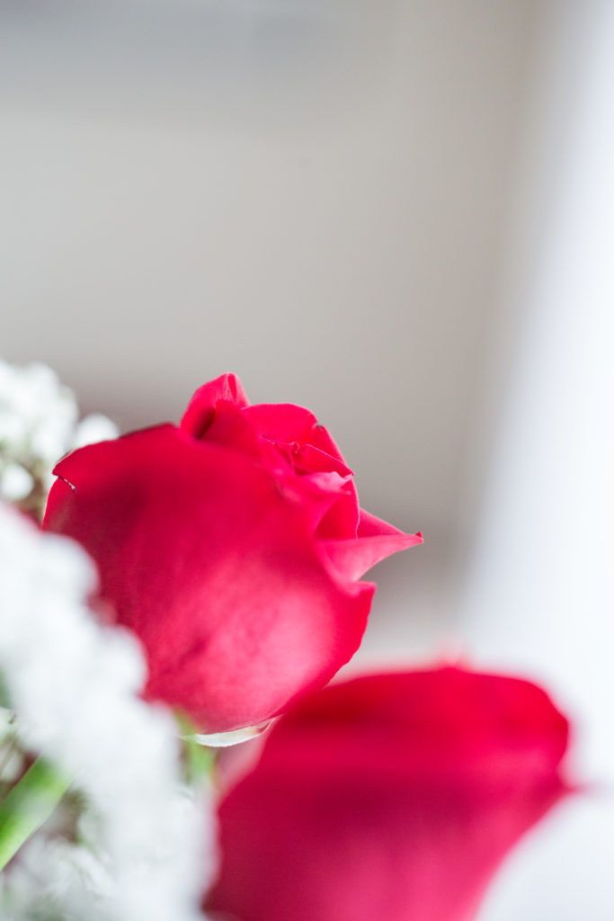 Roses_VGF25044_20170216_18-683x1024.jpg