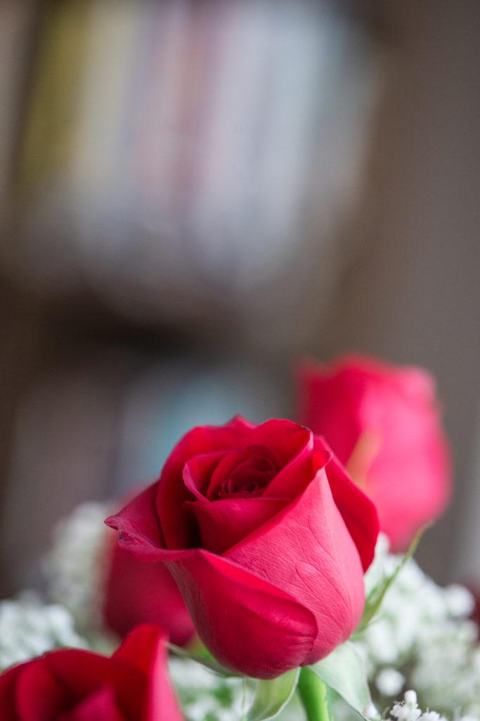 Roses_VGF25049_20170216_21-683x1024.jpg