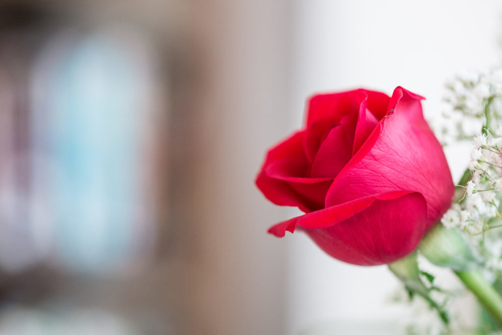 Roses_VGF25054_20170216_25-1024x683.jpg