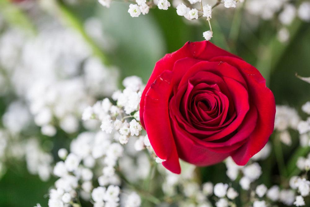 Roses_VGF25057_20170216_26-1024x683.jpg