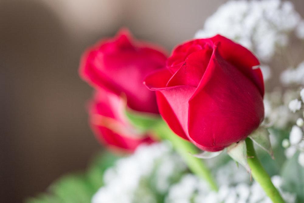 Roses_VGF25059_20170216_27-1024x683.jpg
