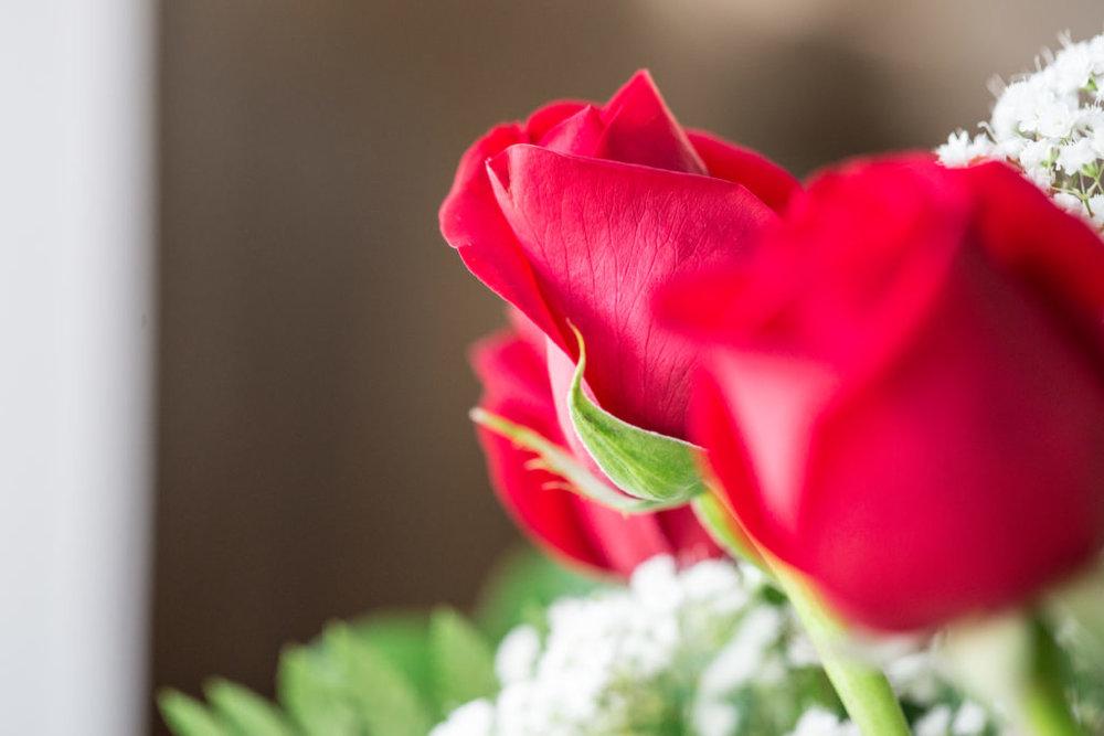 Roses_VGF25061_20170216_28-1024x683.jpg