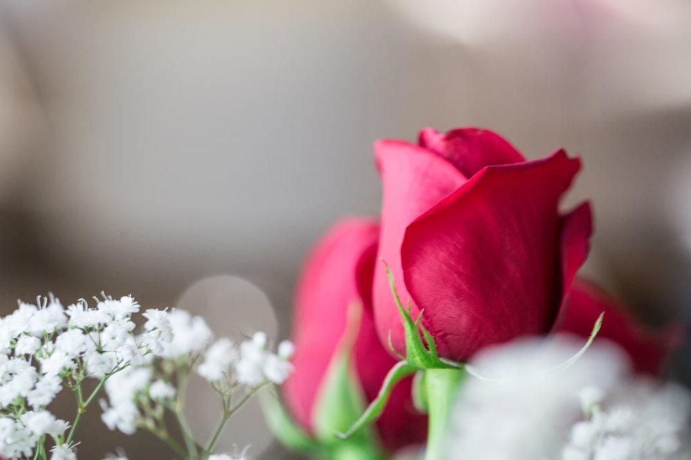 Roses_VGF25062_20170216_29-1024x683.jpg