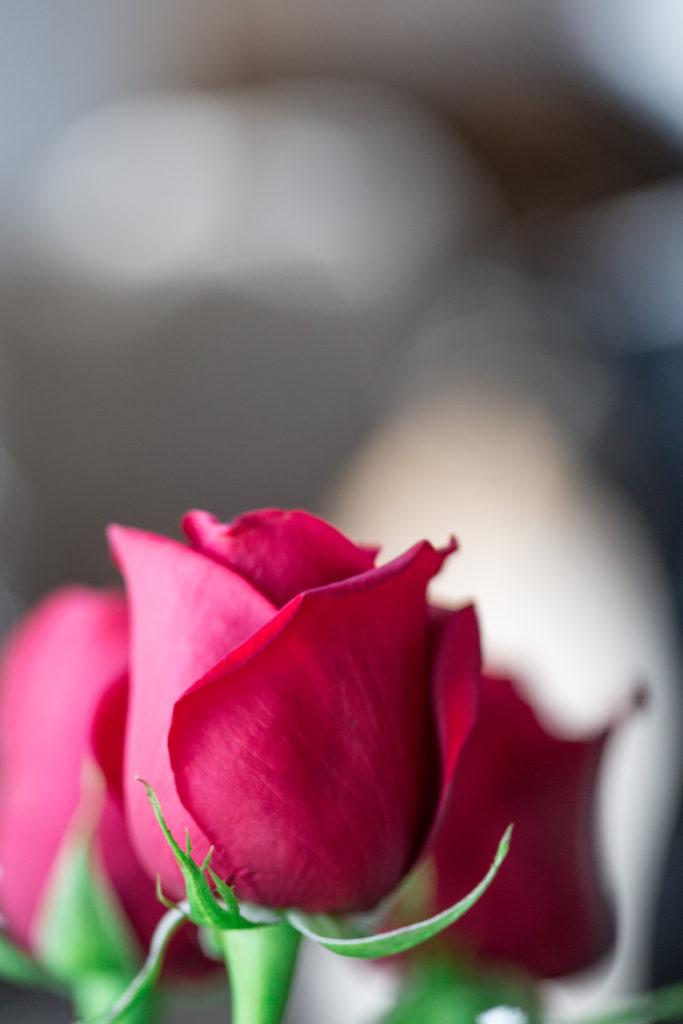 Roses_VGF25063_20170216_30-683x1024.jpg