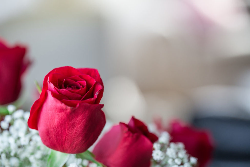 Roses_VGF25067_20170216_33-1024x683.jpg