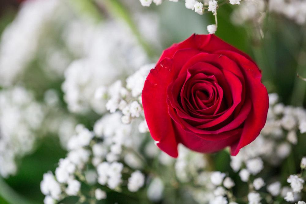 Roses_VGF25071_20170216_35-1024x683.jpg