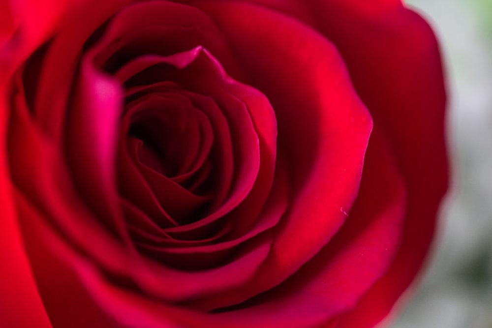 Roses_VGF25075_20170216_36-1024x683.jpg