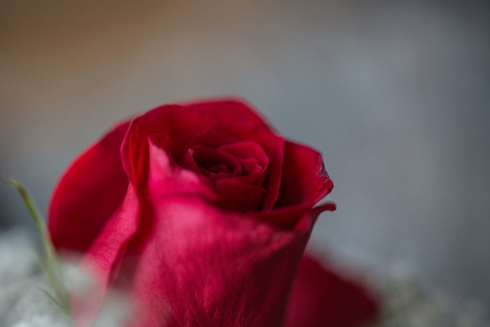 Roses_VGF25078_20170216_37-1024x683.jpg