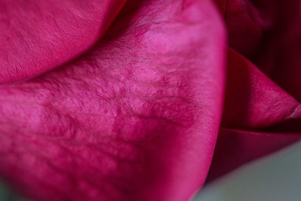 Roses_VGF25087_20170216_39-1024x683.jpg