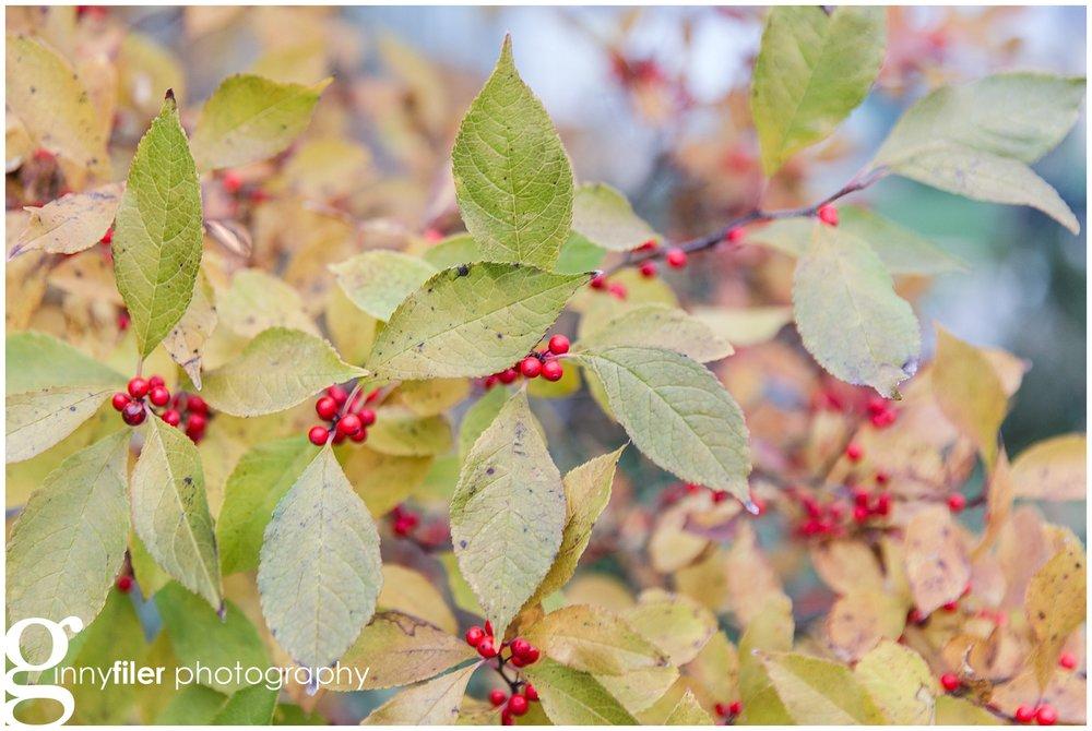 longwood_Christmas_0001.jpg