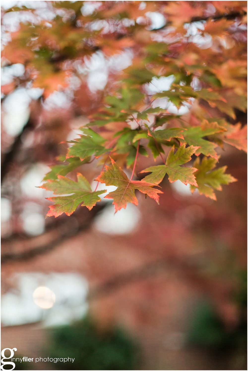 fall_leaves_0001.jpg