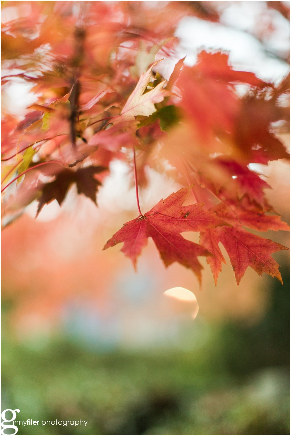 fall_leaves_0003.jpg