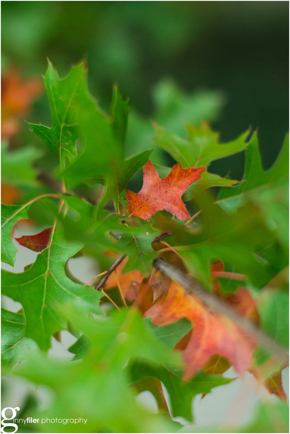 fall_leaves_0005.jpg