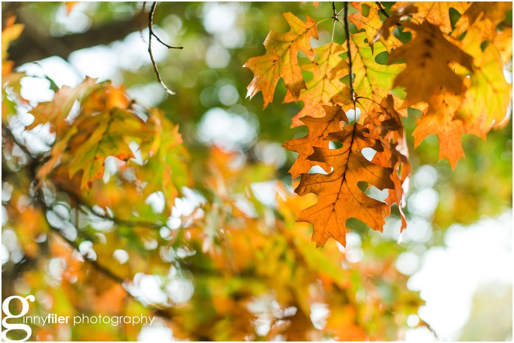 fall_leaves_0008.jpg