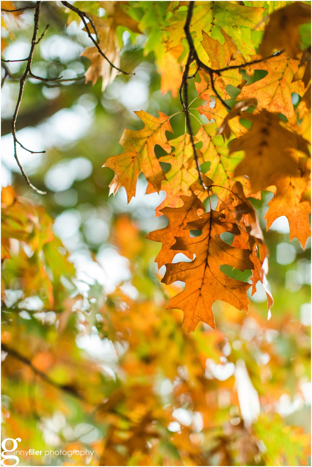 fall_leaves_0007.jpg