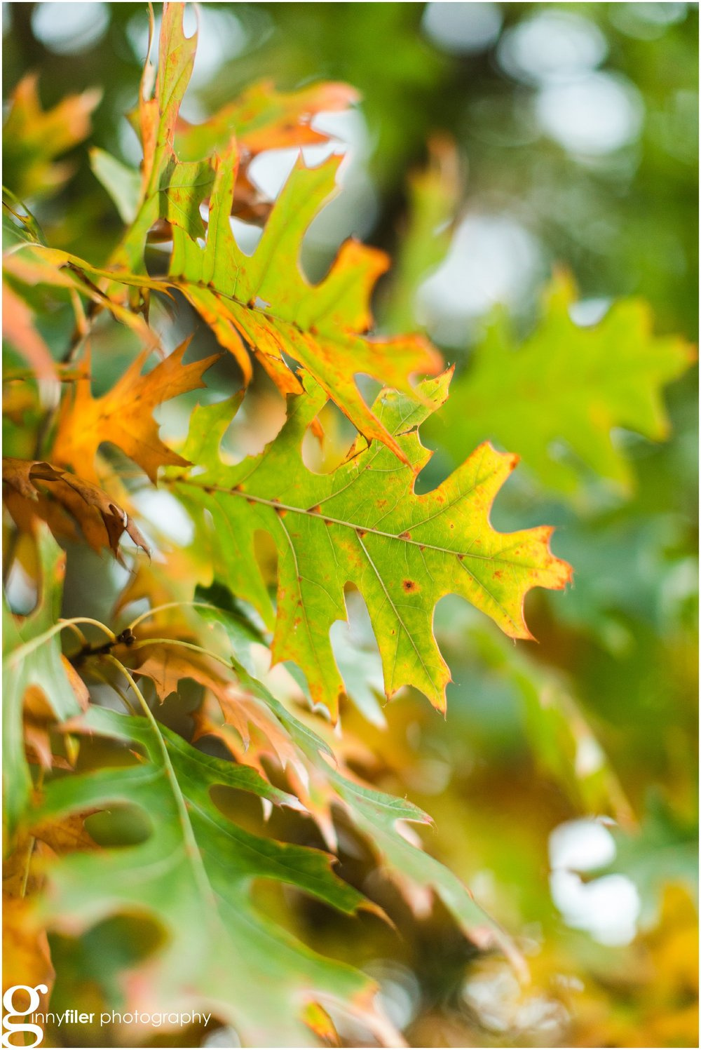 fall_leaves_0009.jpg