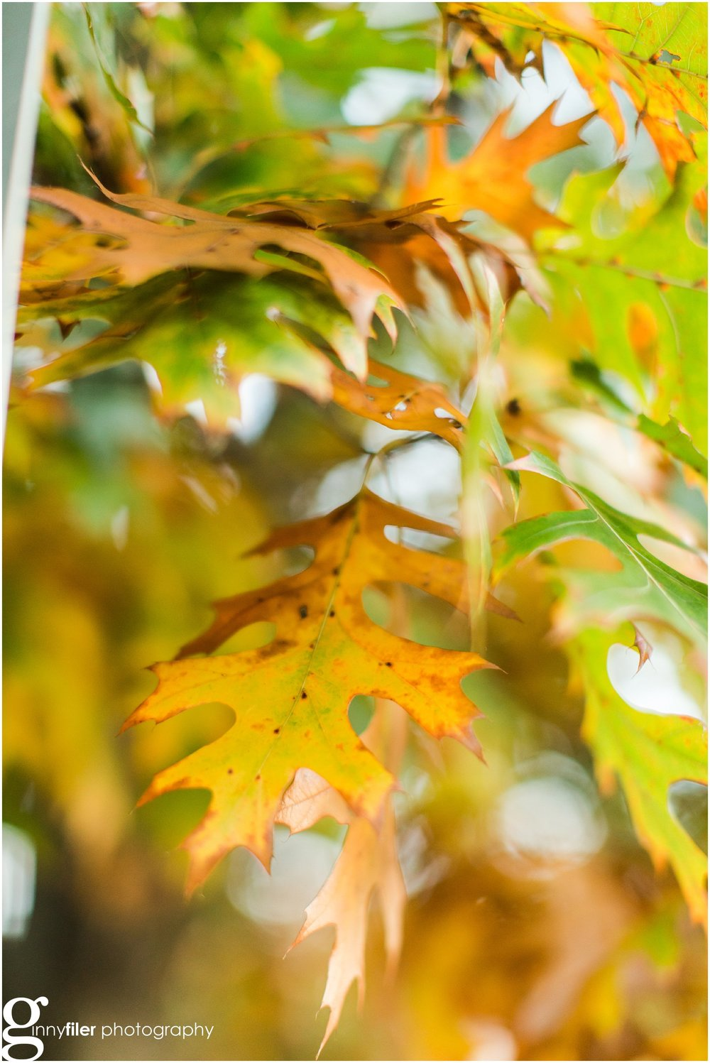 fall_leaves_0010.jpg