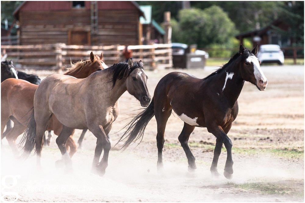 ranch_west_0011.jpg