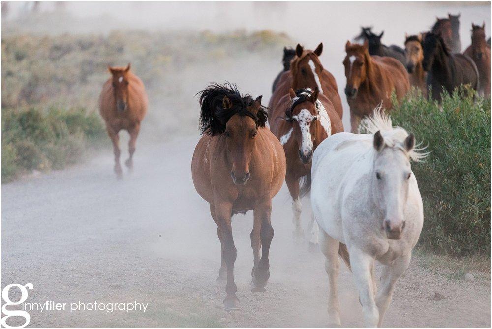 ranch_west_0026.jpg