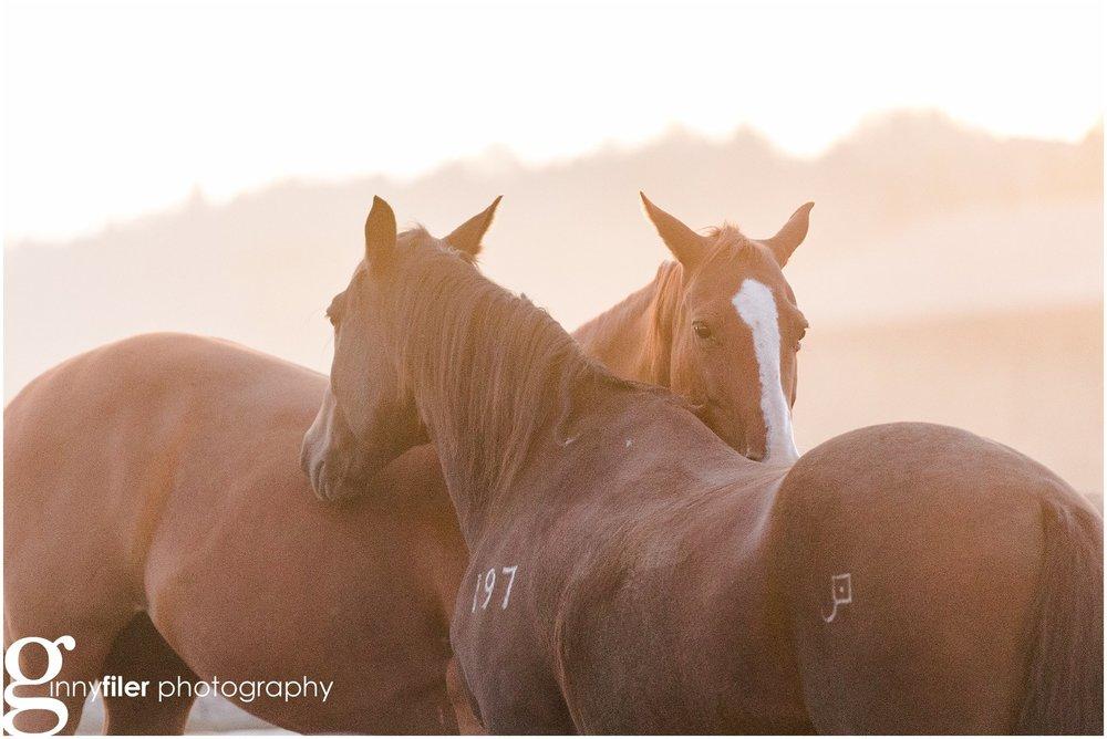 ranch_west_0033.jpg