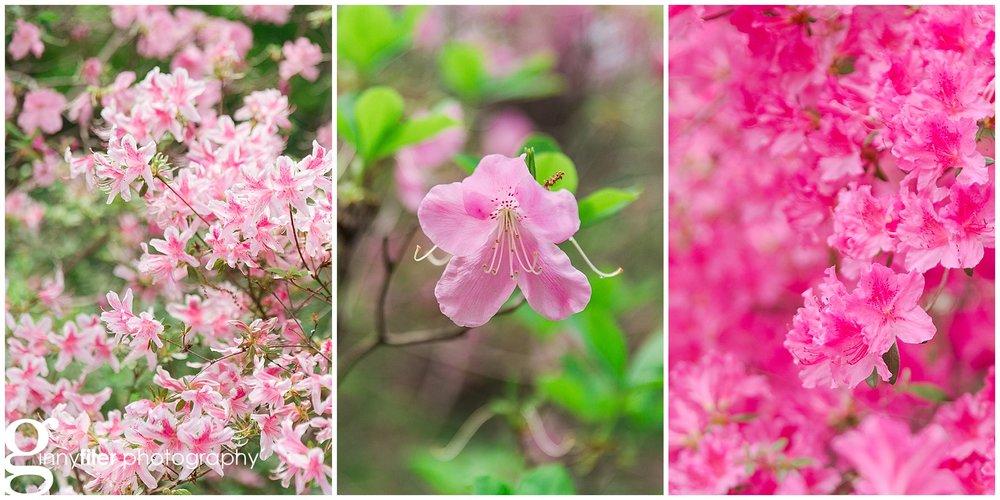 spring_flowers_april_0153.jpg