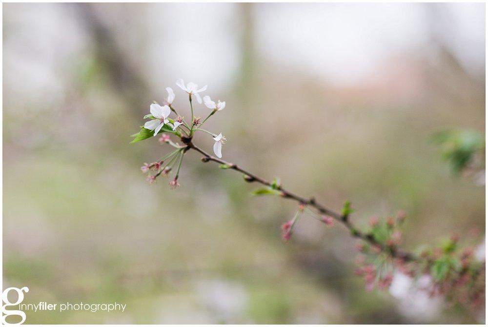 spring_flowers_0068.jpg