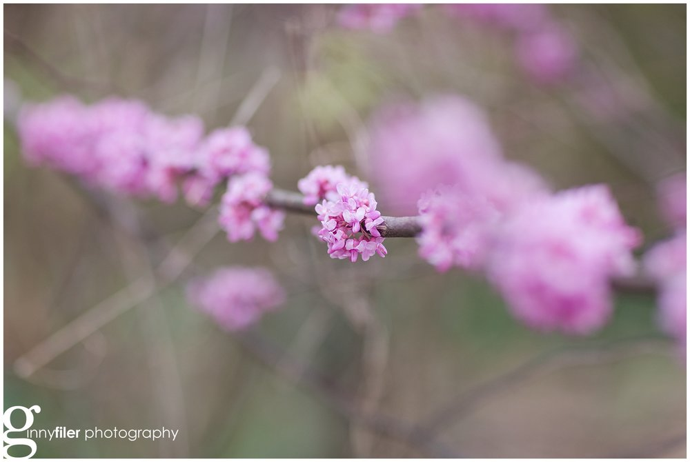 spring_flowers_0072.jpg