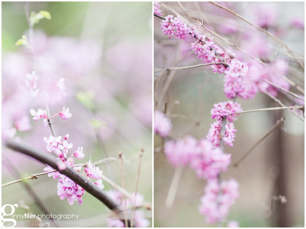 spring_flowers_0073.jpg