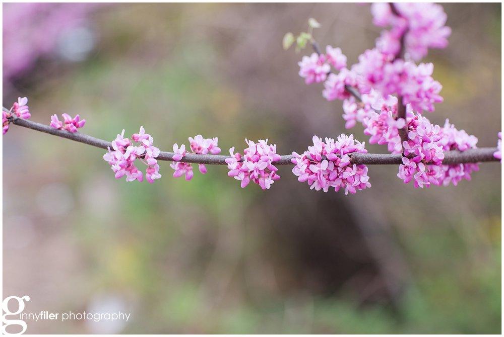 spring_flowers_0074.jpg
