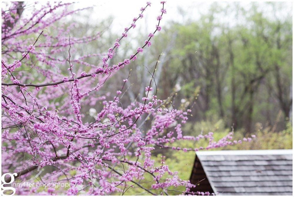 spring_flowers_0075.jpg