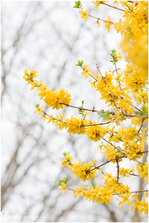 spring_flowers_0076.jpg