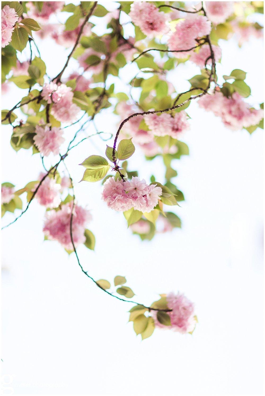 spring_flowers_april_0137.jpg