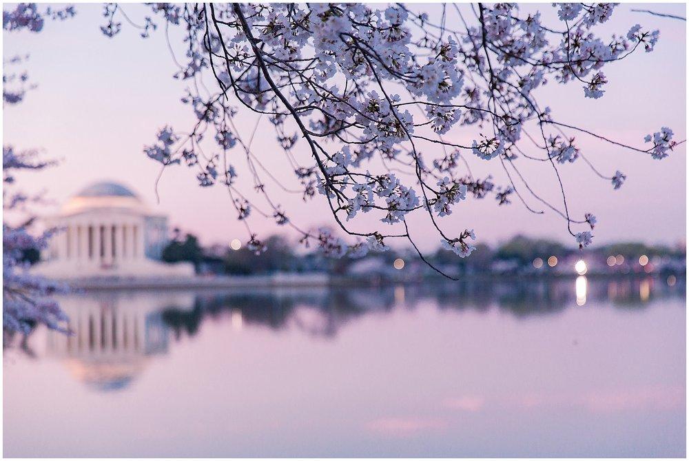 cherryblossom_washingtondc_spring_pink_0023.jpg