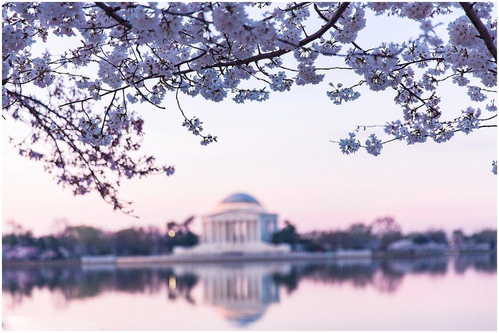 cherryblossom_washingtondc_spring_pink_0024.jpg