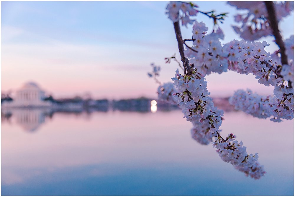 cherryblossom_washingtondc_spring_pink_0026.jpg