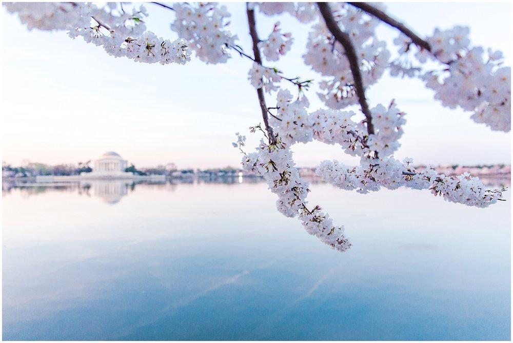 cherryblossom_washingtondc_spring_pink_0027.jpg