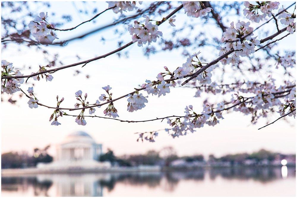 cherryblossom_washingtondc_spring_pink_0029.jpg