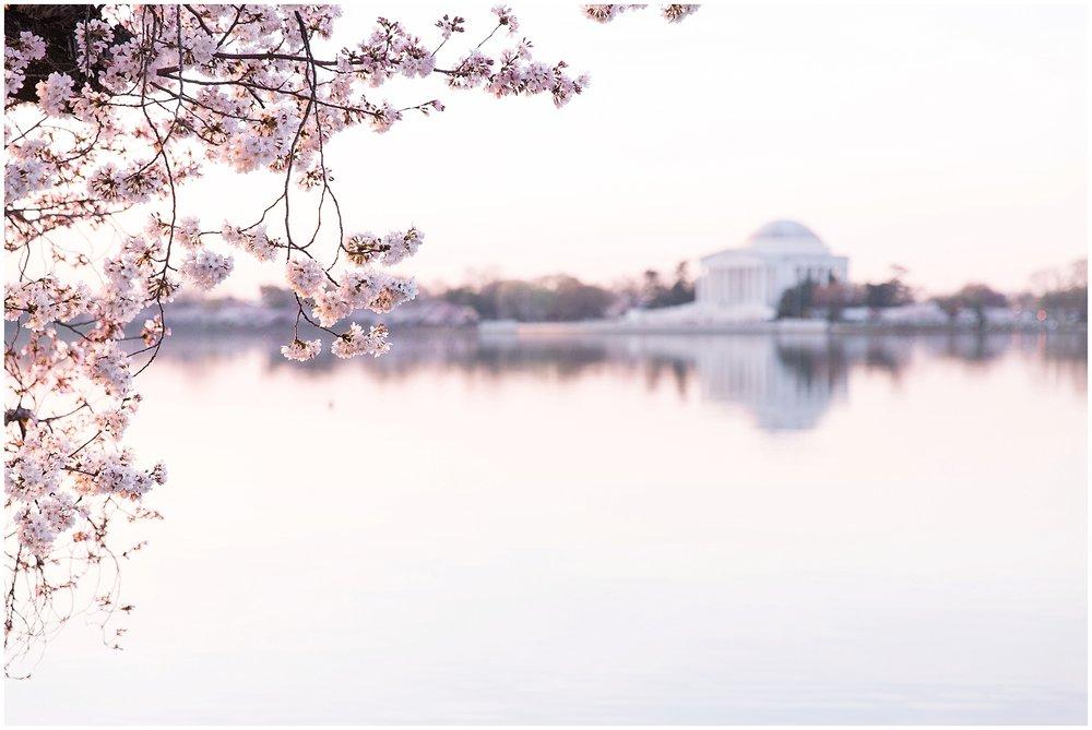 cherryblossom_washingtondc_spring_pink_0041.jpg